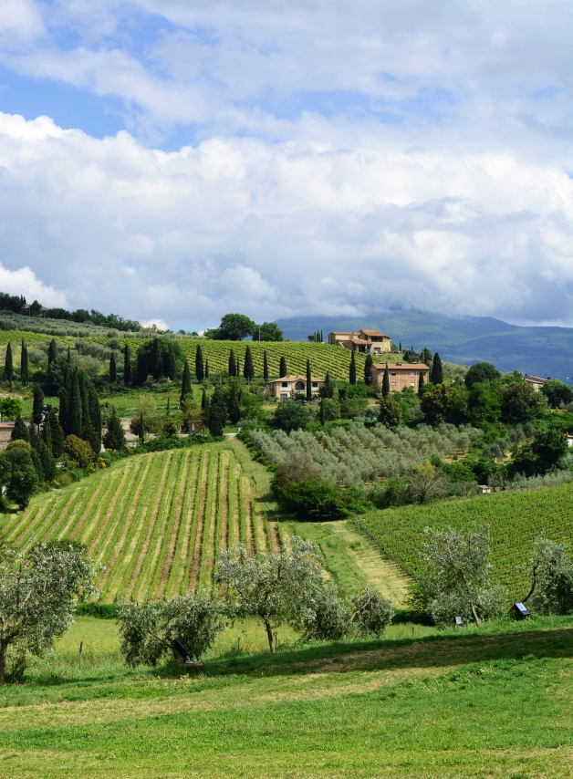 Tuscan hills 2