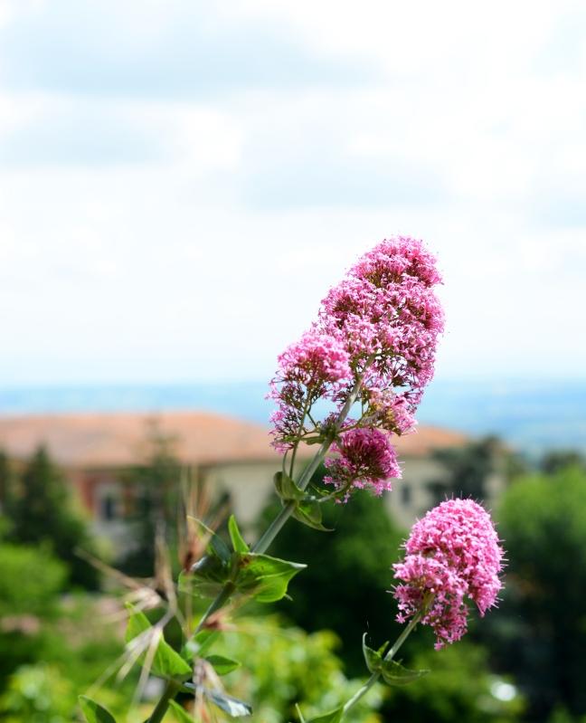 Tuscan hills 6